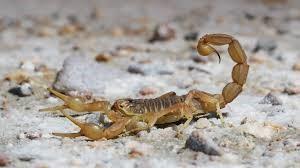 My Scorpion Story
